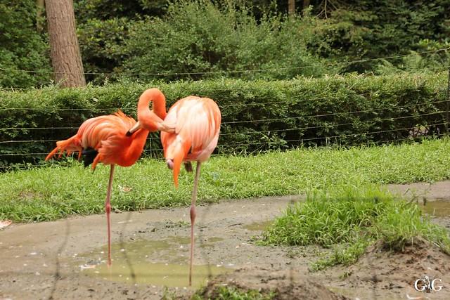 Besuch Zoo Rostock 09.07.201648