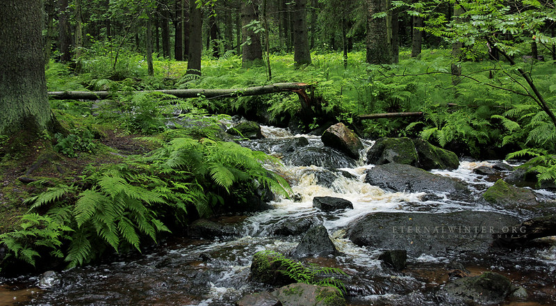 Stream within the green
