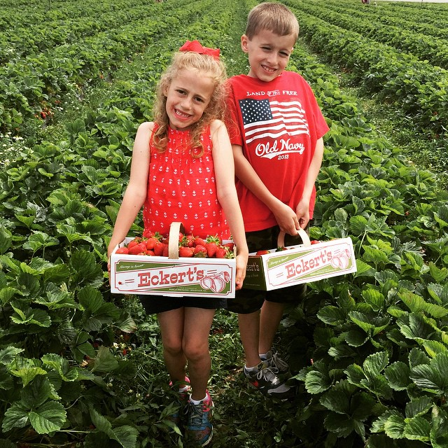 My loves ❤️ I have FOUR strawberry recipes I want to try, three are new... I think we will have plenty of 🍓🍓🍓strawberries🍓🍓🍓 left for munching on, too! #strawberrypicking #yearlytradi