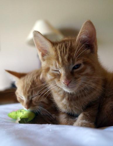 blogpaws-kittensC01546