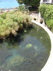 2015-sicilia 203 siracusa-fontana aretusa