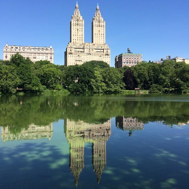 Morgonpromenad i Central park. Många gulliga hundar, ekorrar och fantasifulla fåglar.