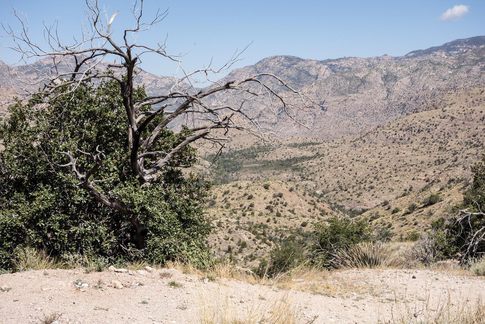 1505 Shreve Saddle without the Arizona Trail Sign