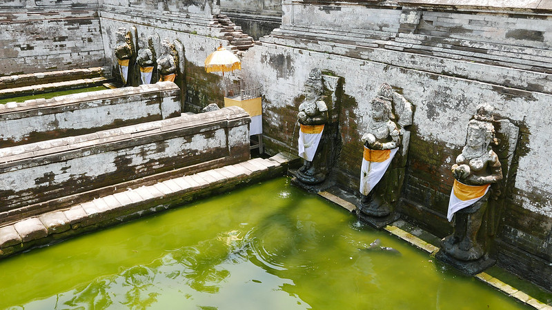 27601423224 14f61bda4a c - The definitive guide to Food, Culture and Nature in Ubud, Bali (October 2015)