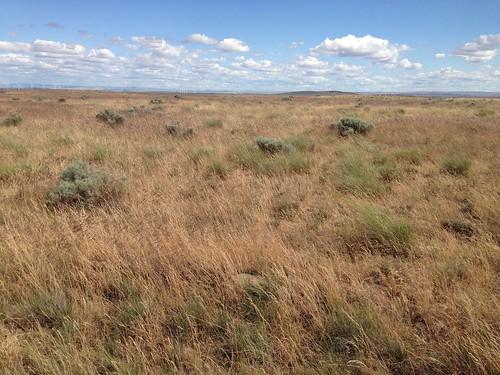 sagebrush prairie