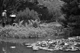 SF Botanical Garden - Pond