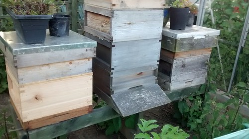 bee hives June 15