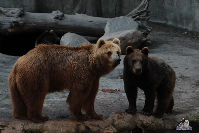 Tierpark Hagenbeck Dschungelnacht 06.05.2015   168