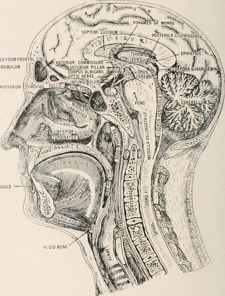 Image From Page 319 Of Anatomy In A Nutshell A Treatise Flickr