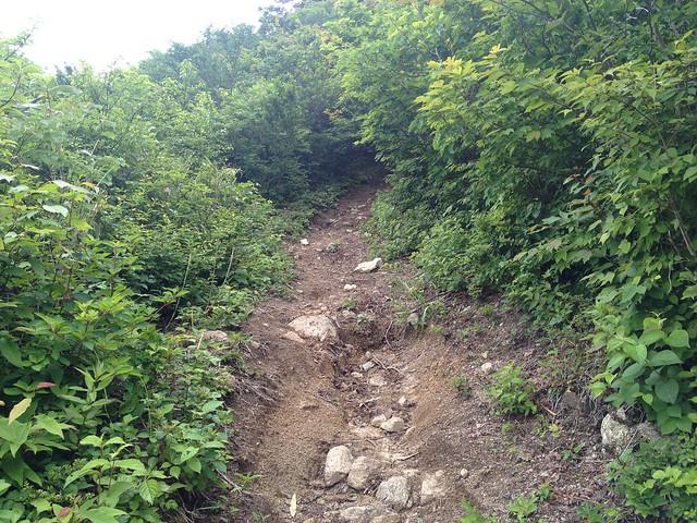 貝月山 長者平ルート 登山道