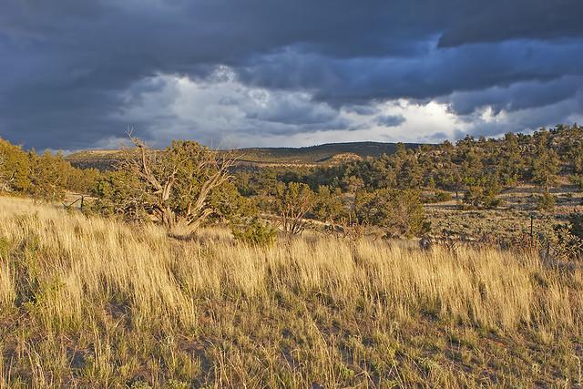 Landscape 20d_1719