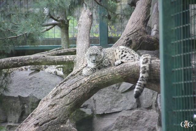 Tierpark Friedrichsfelde 17.05.201559