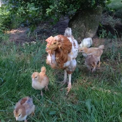 ippie de kippie