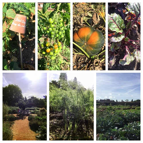 hampton court vegetable garden