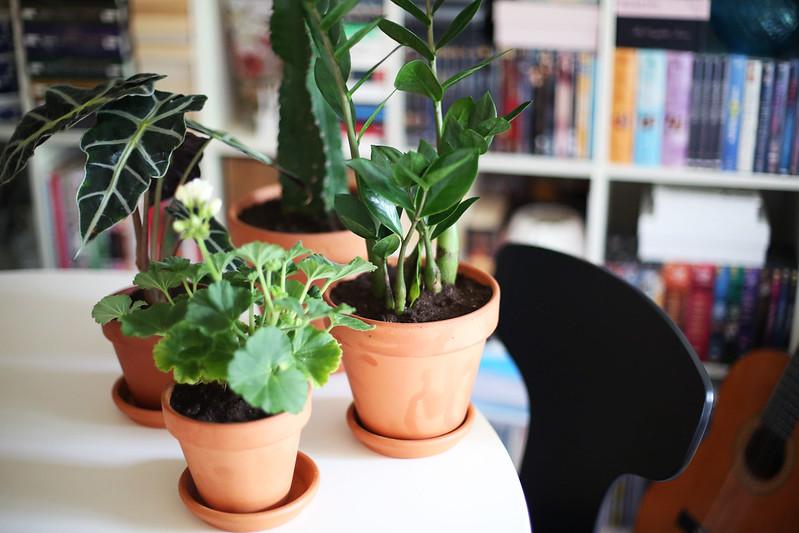nya växter