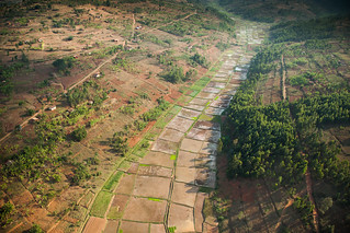 Rice paddie | by World Bank Photo Collection
