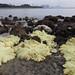 Mass coral bleaching at Kusu Island, 7 Jul 2016