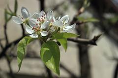 Itt a tavasz / Spring is here