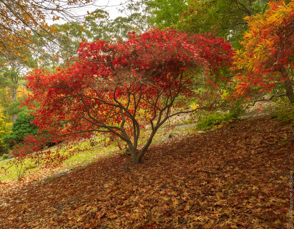 20150422 Mount Lofty Botanic Garden-29