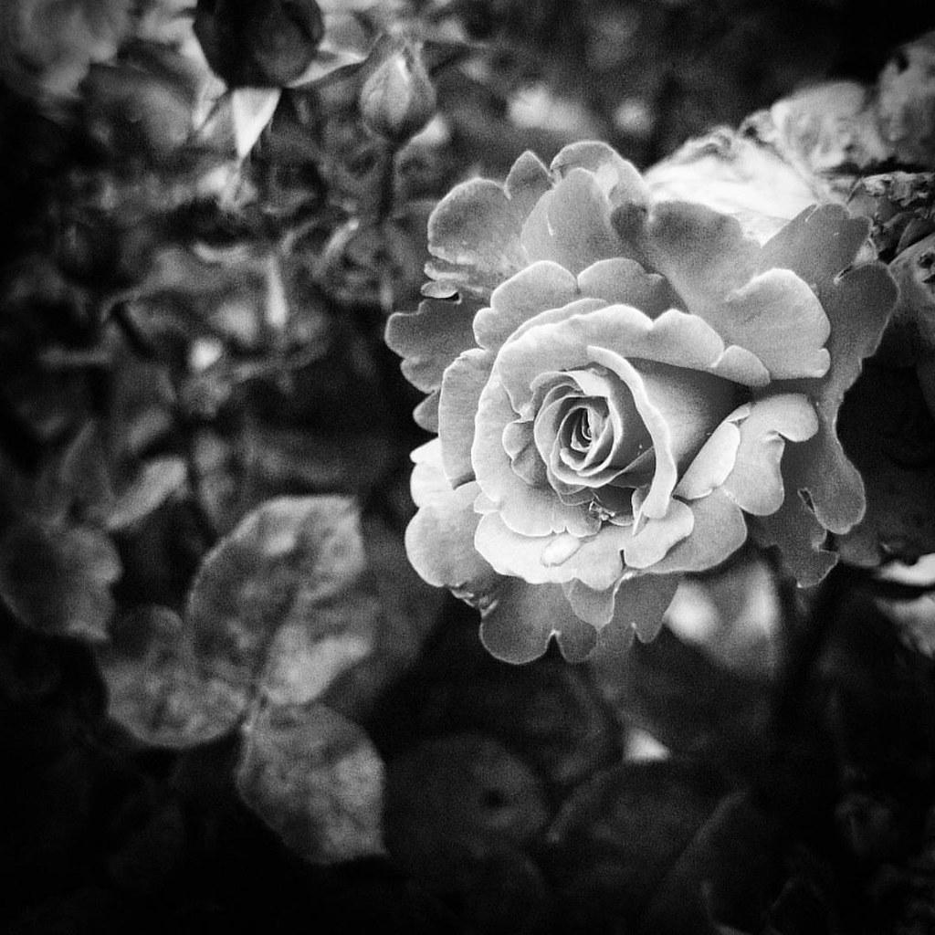 White Flower Love Photooftheday Amazing Likes4follow Flickr