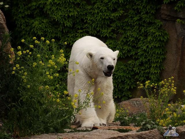 Zoo Berlin 09.06.2015  40