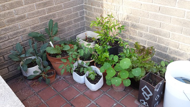 Patio garden progress