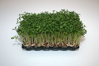 14 - Zutat Kresse / Ingredient cress