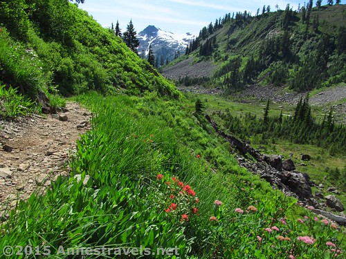 Wildflowers along the Lake Ann Trail, Mt. Baker-Snoqualmie National Forest, Washington