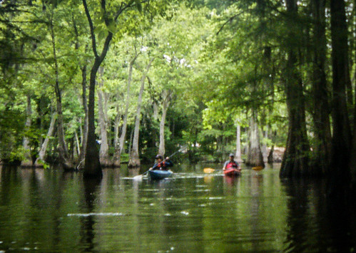 Sparkleberry Swamp-113