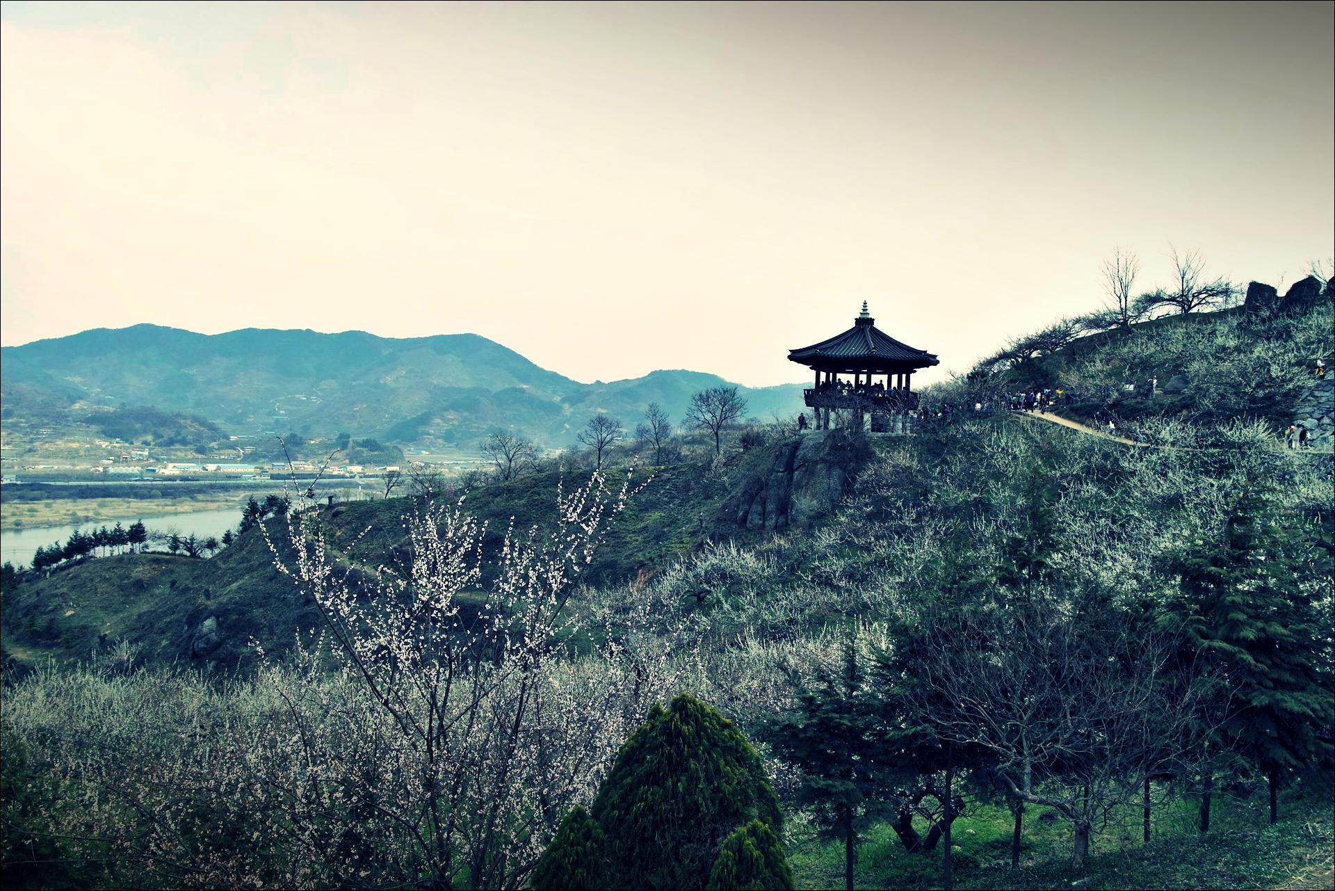 홍쌍리 매실마을 매화축제 apricot blossom festival-'풍경'