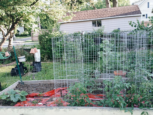 tomatoes and peppers 5/28/15