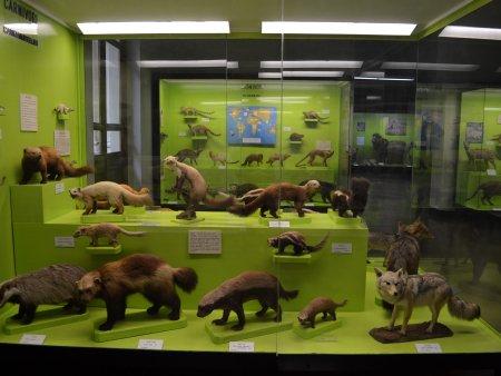 Muzeul de stiinte naturale 1