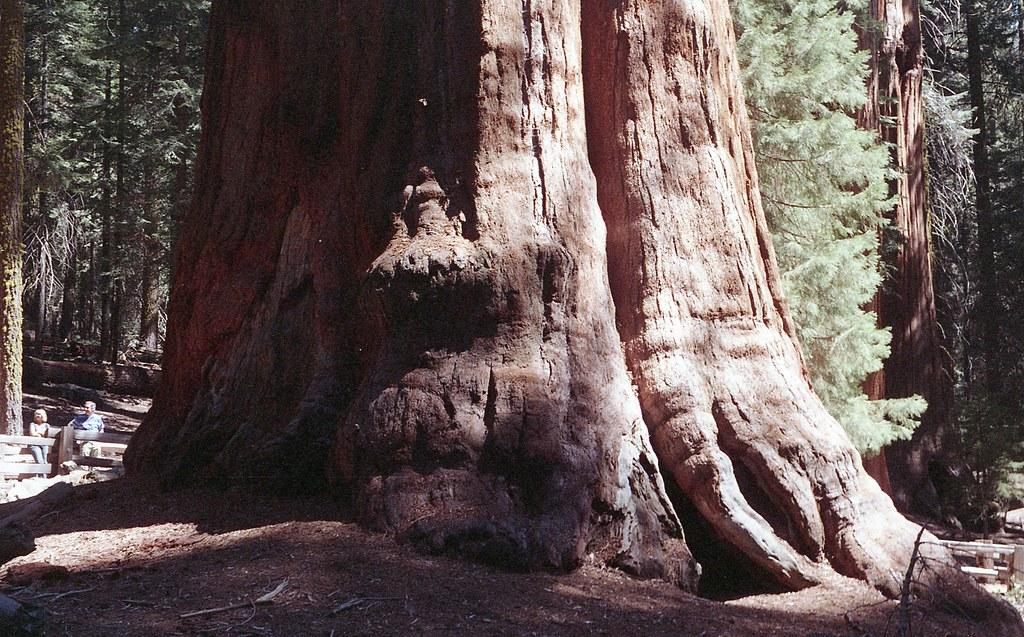 sequoia2015_019