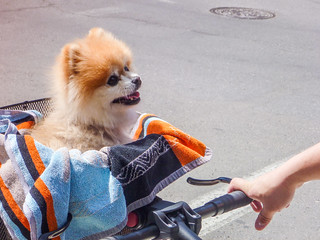 Dog in a Bike Basket at 200km | by djking