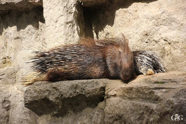Besuch Tierpark Friedrichsfelde 07.08.1633