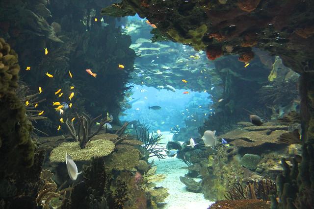oceanario-lisboa25