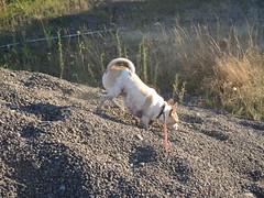 Running donhill