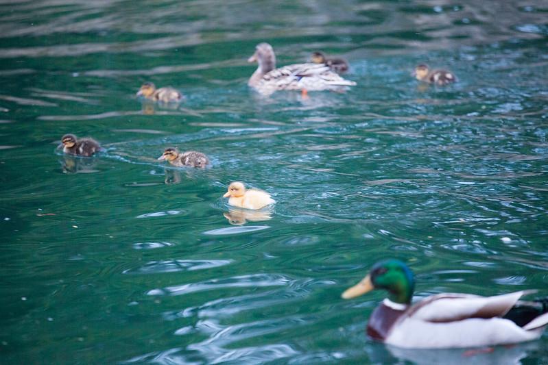 全家人。小鴨眼影畫好重