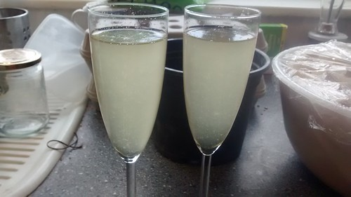 elderflower champagne May 15
