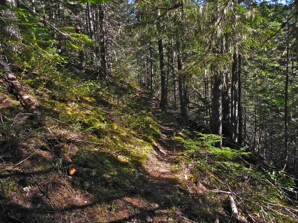 Anne Creek trail