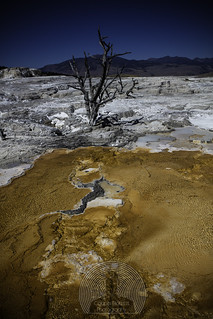 Mammoth Hot Springs | by Cooper Ricketts Photography
