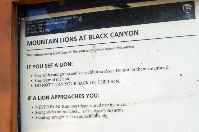 mountain-lions-black-canyon