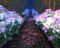 紫陽花の路_01