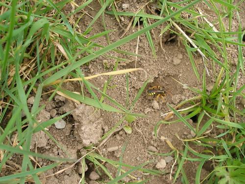 seen near cineraria nest