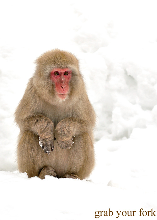 Snow monkey sitting in the snow at Jigokudani Monkey Park, Nagano