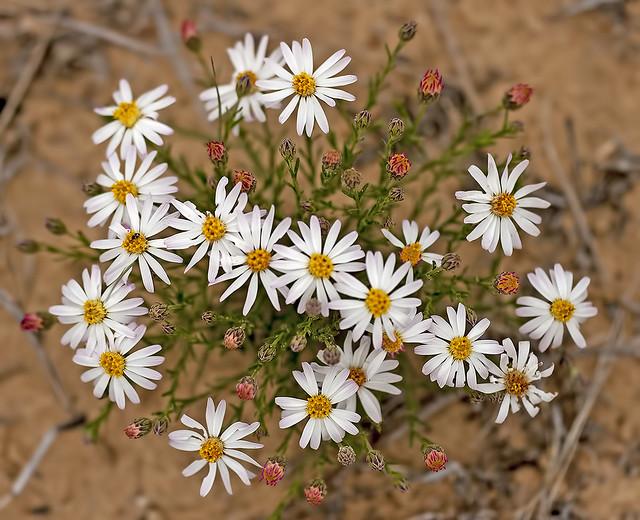 Wild Flower 20d_1750