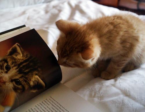 blogpaws-kittensC01585