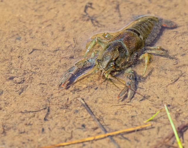 Crawl-dead-31-7D2-240716