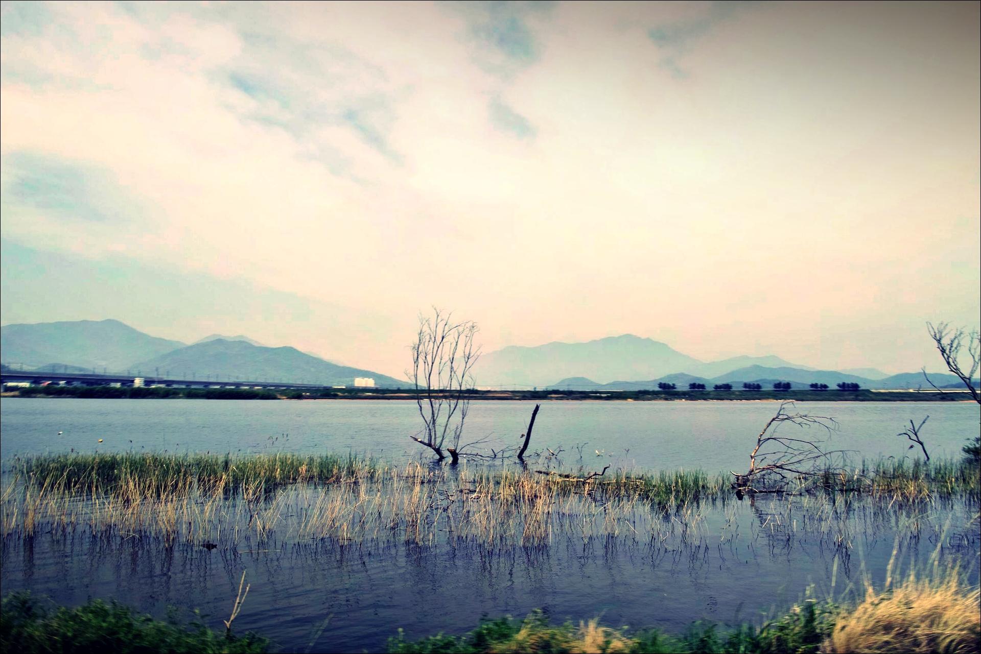 나무의 죽음-'낙동강 자전거 종주여행'