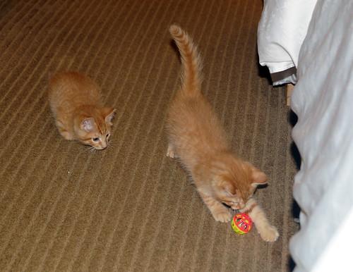blogpaws-kittensC01626